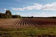 Potato Field, Fall 2001