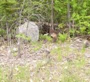 Turkeys Blend in to Habitats to Avoid Predators (2003)