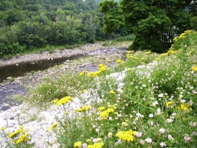 Flowers overlooking the Sandy River in New Sharon (2003)