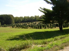 Christmas Tree Farm (2004)