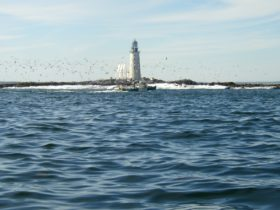 Halfway Rock Lighthouse with birds circling a lobster boat on Casco Bay (2004)