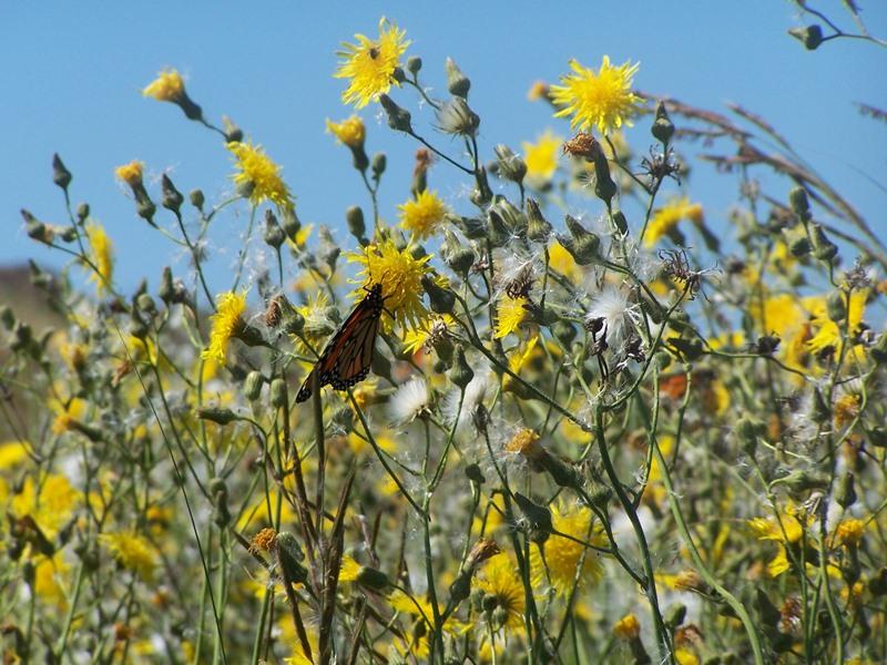 Butterflies Maine An Encyclopedia