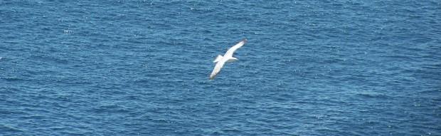 Seagull Near Monhegan Island (2007)