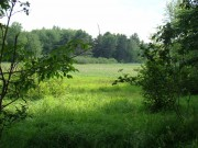Wetland in Brooksville (2008)