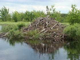 Beaver Lodge at Lobster Lake (2008)