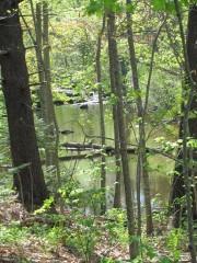 Stream in Cramer Park (2010)
