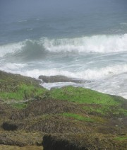 Surf Pounding the Shore at Reid State (2010)