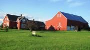 Farm in Benedicta (2012)