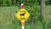Sign: Caution Horses (2012)