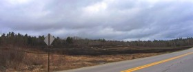 Recently Burned Blueberry Barren in Waltham (2013)
