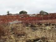 Rock Strewn Blueberry Barrens in Northwest Franklin (2013)