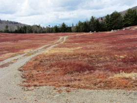 Silsby Plain Road through a Blueberry Barren west of the Great Pond Road (2013)