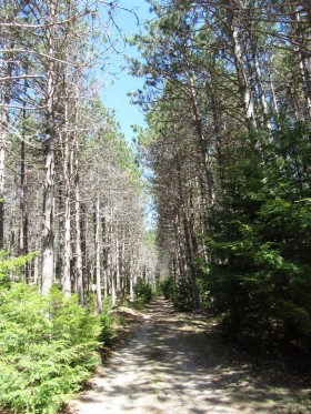 Access Road from Fourth Lake Road to Cabin on Fourth Machias Lake in Sakom Township (2013)