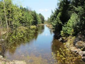 Stream linking Pocumus Lake and Wabassus Lake on the Fourth Lake Road in (2013)