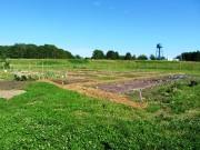 Community Garden (2013)
