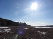 Wetlands at Fisher Eddy on the Kennebec River (2014)