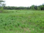 Wetland with Bird Box near Atkinson Corners (2014)