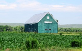 Barn in Corn Field and  .  .  .