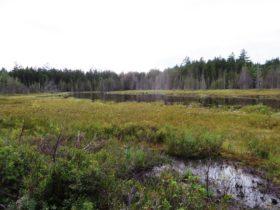 Moose Pond (2014)
