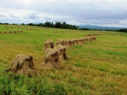 Stacked Oats in Southern Aroostook County (2014)