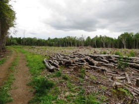 Logging Yard on Cow Team Trail in Crystal n the Maine woods (2014)