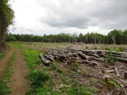 Log Yard on Cow Team Trail in Crystal (2014)