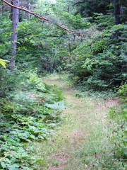Seboeis River Trail near Grand Lake Road (2014)