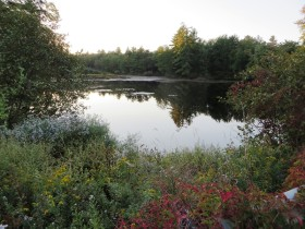 Pond on Swan Pond Brook (2014)