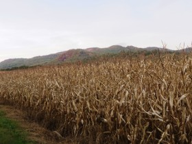 Mountains over a Corn Field in Rumford (2014)