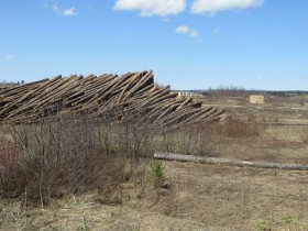 Stacks of logs on the Garfield Road near Route 11 in Masardis (2015)