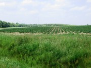 Potato Field on Route 228 in Perham (2015)