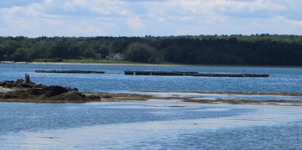 Bangs Island Aquaculture Site off West Shore (2015)
