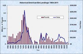 Americal Eel 1964-2011