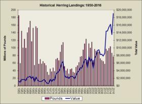 Herring Landings 1950-2016