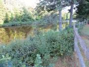 Carrabassett River (2012)