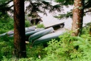 Photo: Moose Near Canoes at Russell Pond (1996)