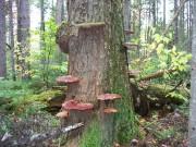 On the Trail: Shelf Fungus