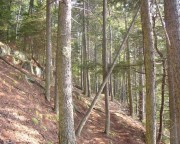 Along a Trail at the Coastal Studies Center (2005)