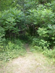 Path to AT Trail North from Caratunk (2007)