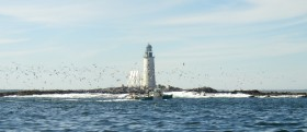 Seagulls Surround a Lobster Boat, Half Way Rock, Casco Bay (2004)
