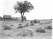 Haying in Western Maine (George French Collection, Maine State Archives)
