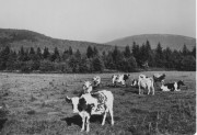 Pasture and Rolling Hills (c. 1940)