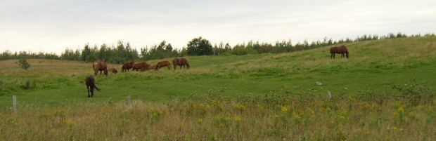Horses Grazing in Pasture on the West Ridge Road in Easton (2003)