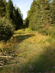 The Trail in the Edmunds Division, Moosehorn Refuge (2004)