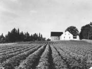 Farm in Corinna (c. 1950)