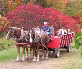 Cart Rides at the Apple Farm (2003)