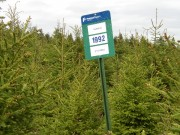 "Fraser Paper Plantation Management: ""1992"" White Spruce (2003)"