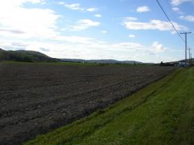 A Prepared Field (2003)