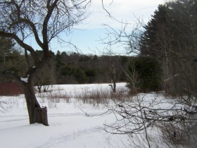 Meadow at Mast Landing Sanctuary (2005)