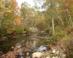 Abandoned Bridge Abutments on Elkins Brook (2004)